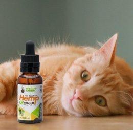 Steve's Goods Hemp Oil cat